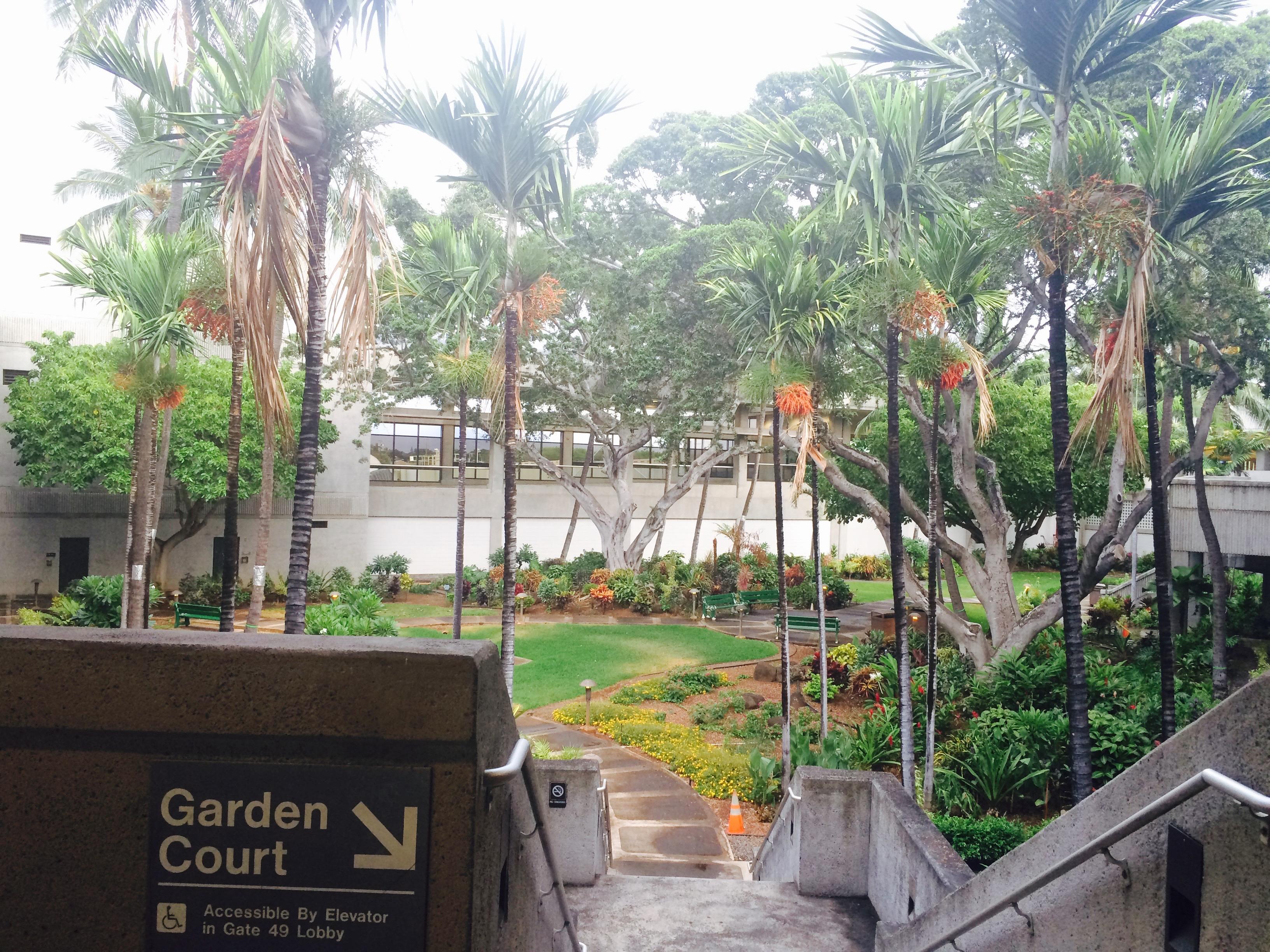 Big Island, Hawaii, Week One. | Terrestrial & Oceanic Discoveries