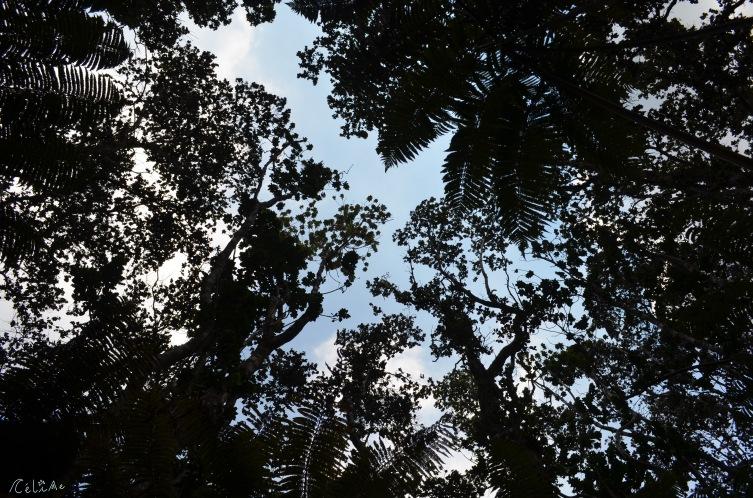 5 native canopy